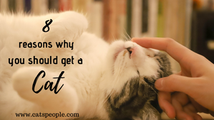 8 Reasons Why You Should Get A Cat