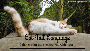 5 things your cat is telling you with its tail