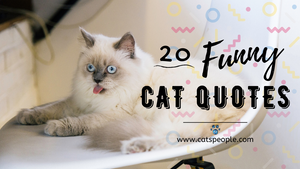 20 Funny Cat Quotes