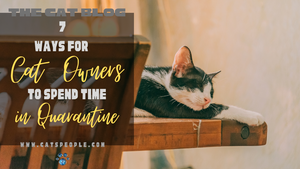 7 WAYS FOR CAT OWNERS TO SPEND TIME IN QUARANTINE