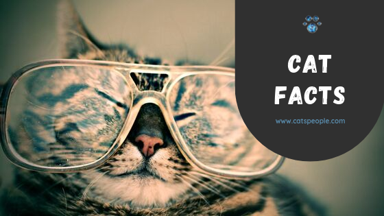 5 Cat Facts You Should Know