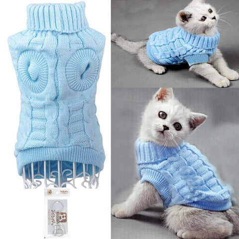 adorable white kitten wearing blue sweater for cats
