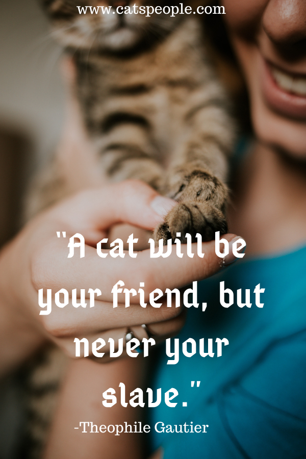 cat quote about cat friend