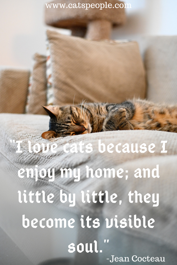 cat quote about cats and home