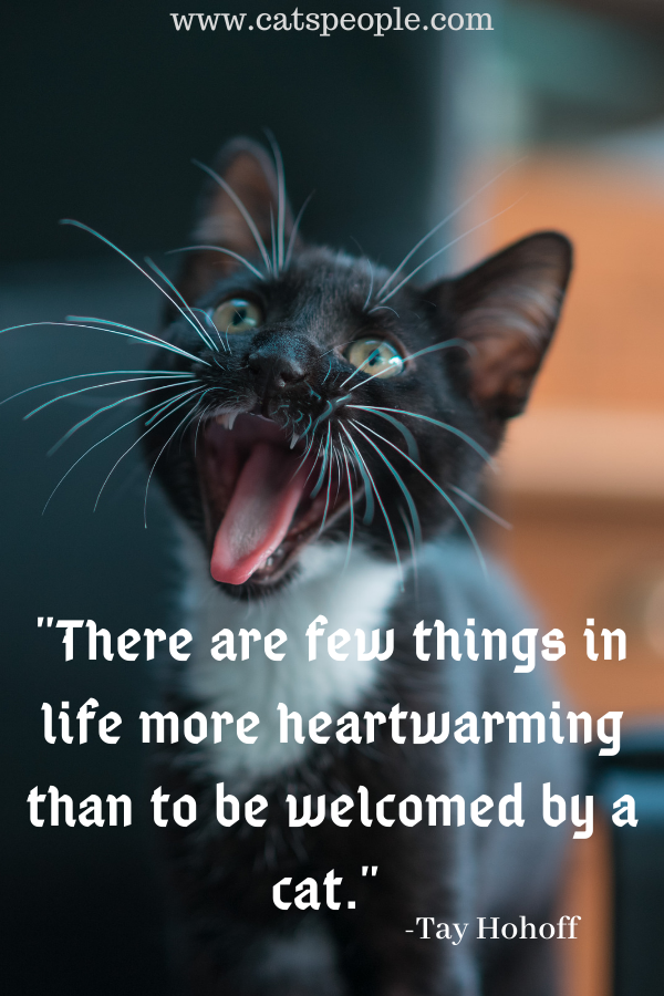 heartwarming cat quote for cat lovers
