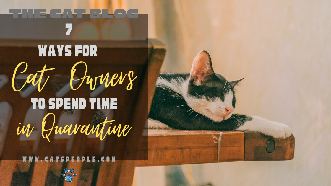 things for cat owners to do in quarantine