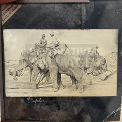 Lantern Slide | Elephants at Work, Burma (ca 1890s)