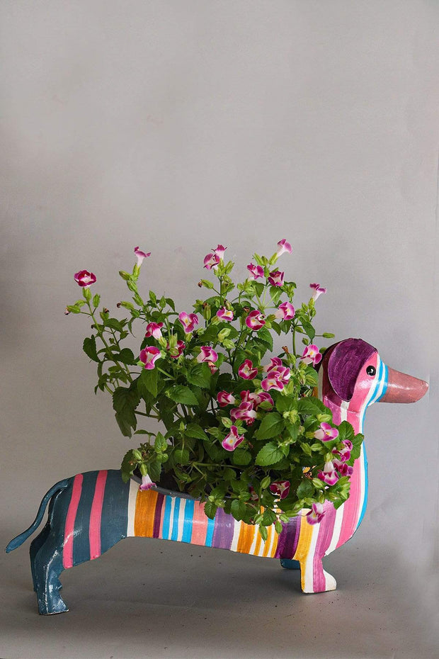 Buy Dachshy Metal Planter (Multi-Colored) Online | Freedomtree.in
