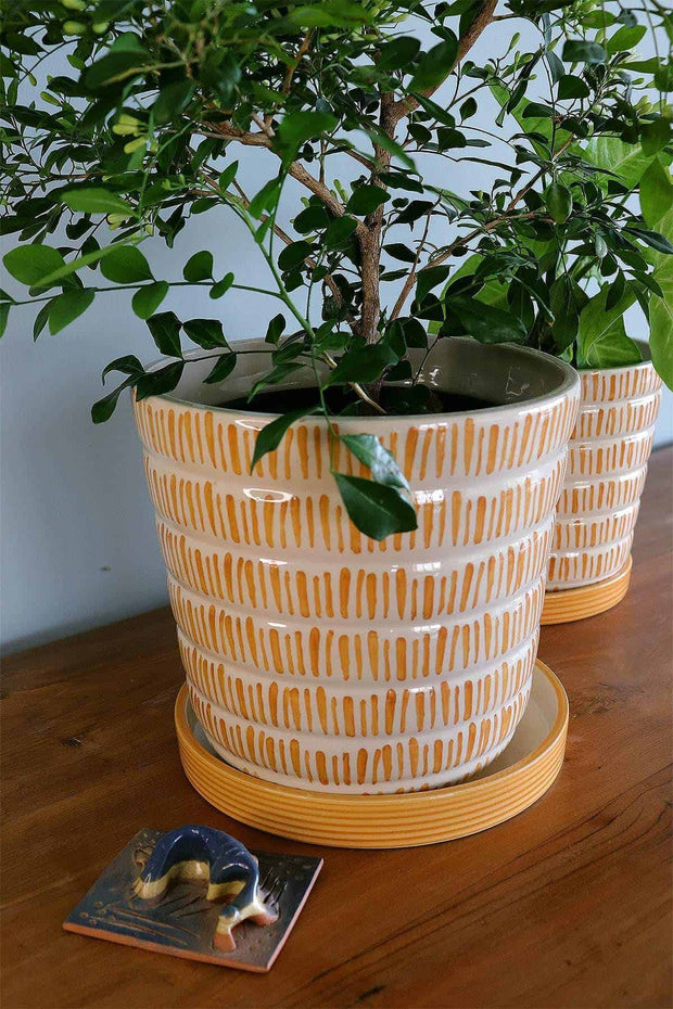 Buy Kyoto Ribbed Planters With Tray (Mustard White) Online | Freedomtree.in