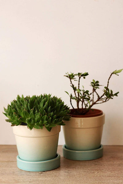 Buy Ombre Herb Planters Mint (Set Of 2) Online | Freedomtree.in