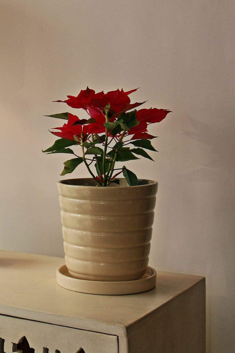 Buy Solid White Ribbed Planters With Tray (Ceramic) Online | Freedomtree.in