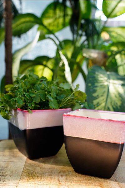 Buy Studio Line Herb Black/Pink Herb Planters (Set Of 2) Online | Freedomtree.in