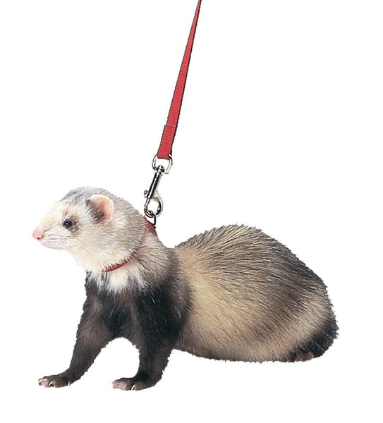Marshall Pet Products - Ferret Harness And Lead Combo
