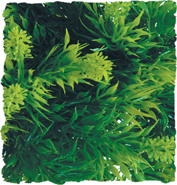 Zoo Med Laboratories Inc - Natural Bush Malaysian Fern Plant