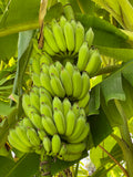 Thai Banana (Nam Wah)