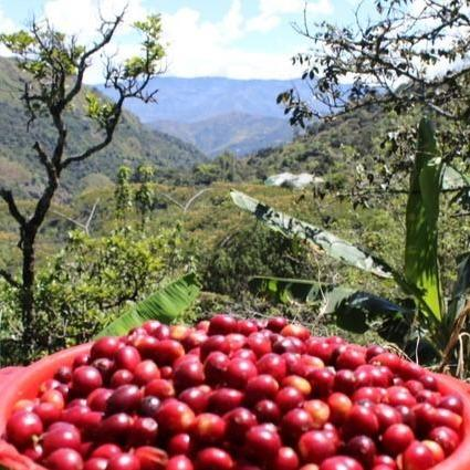 El Tambo | Colombia - Roast Lab Coffee Roasters