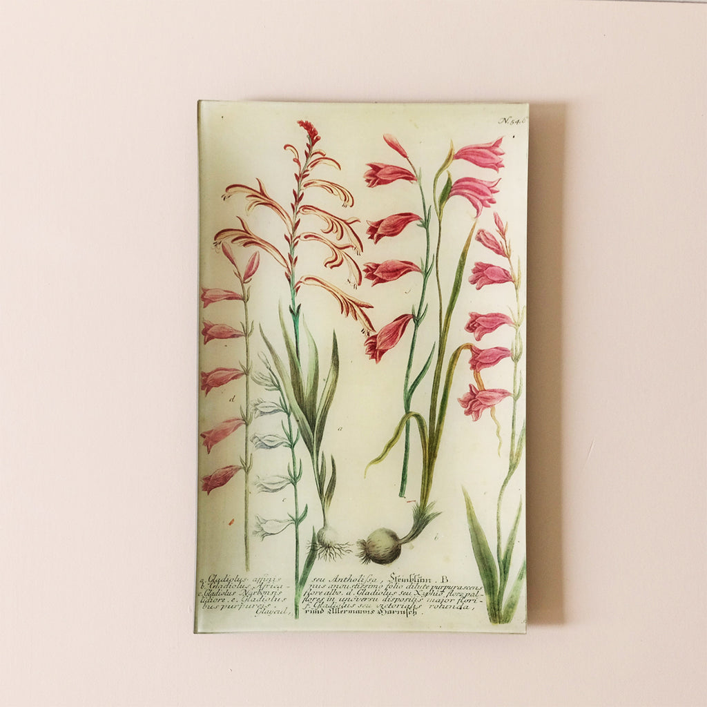 "10""x16"" Rectangle Dish, African Gladiolus"