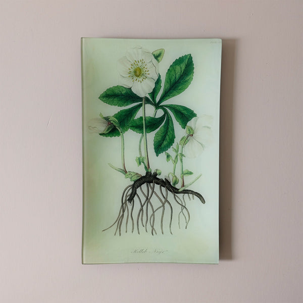 "10""x16"" Rectangle Dish, Hellebores"