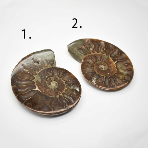 Ammonite Cut Greater Than 7cm AMMCG7010 - Madagascar Import SEAM Inc.