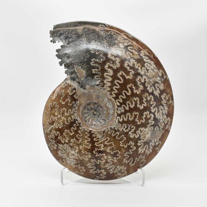 Ammonite 2 Faces Polished AMMP2F092