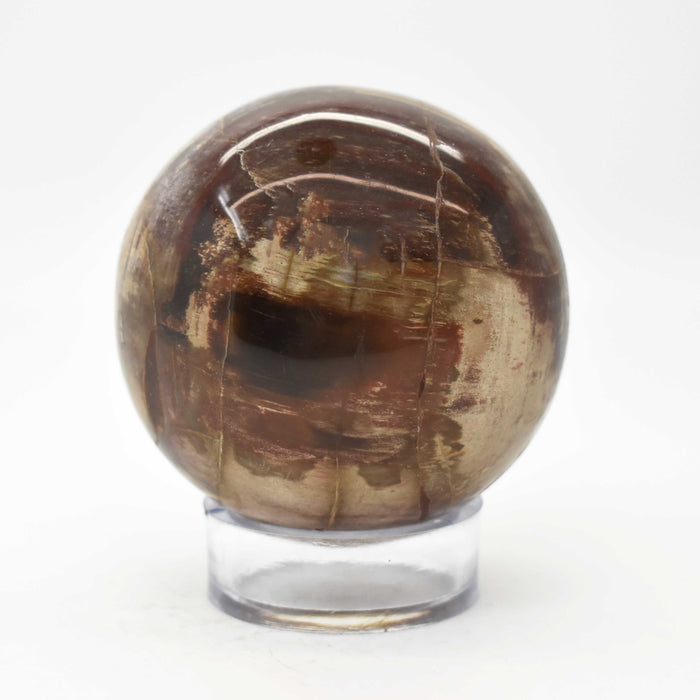 Petrified Wood Sphere PWODSP016