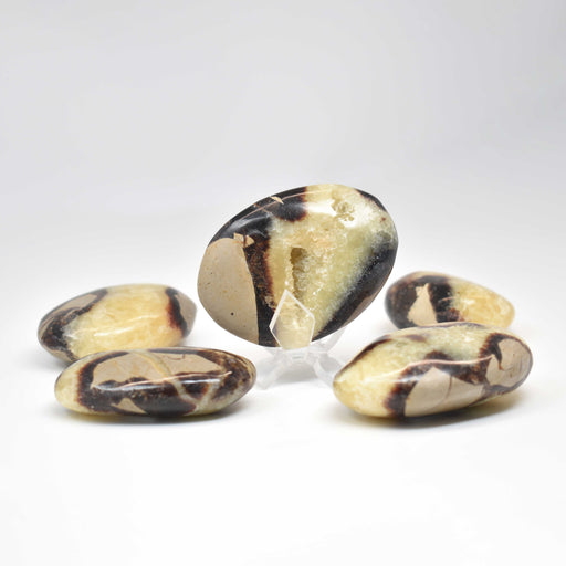 Yellow Septarian Galet SEYLGA004 - Madagascar Import SEAM Inc.