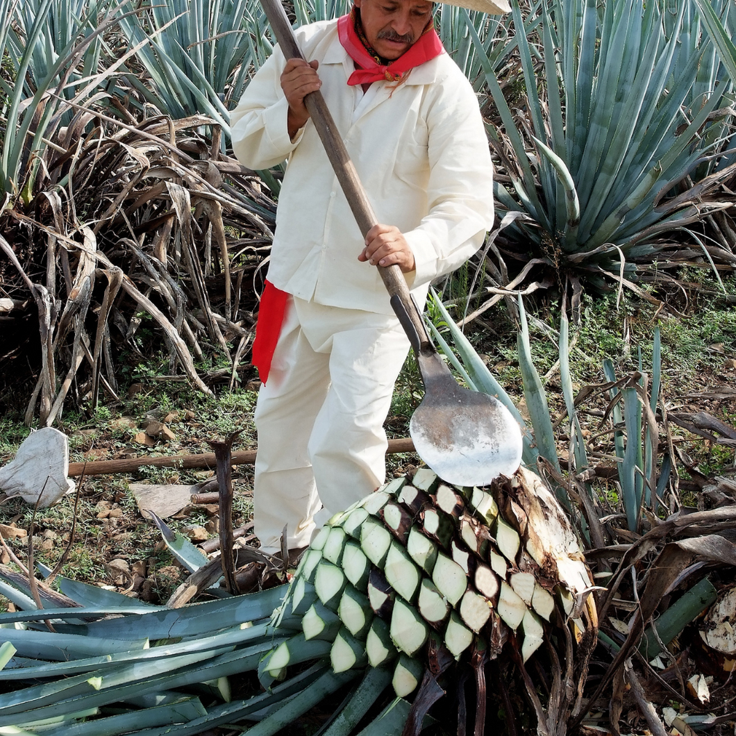 Seco Collective XVI: Agave Spirits: Tequila + Mezcal