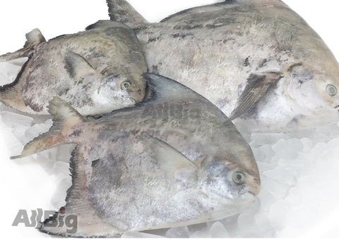 Chinese Pomfret (800G-1KG) - All Big Frozen Food Pte Ltd