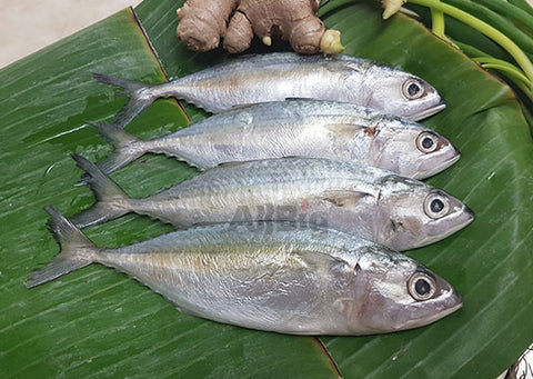 Indian Mackerel (Kembong Fish) Cleaned (500G) - All Big Frozen Food Pte Ltd
