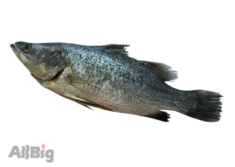 Seabass Whole Cleaned (700G-800G) - All Big Frozen Food Pte Ltd