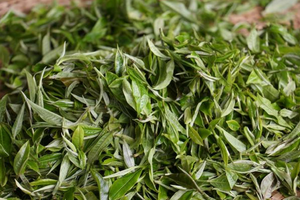 Moonlight White Tea, $14.99/2oz