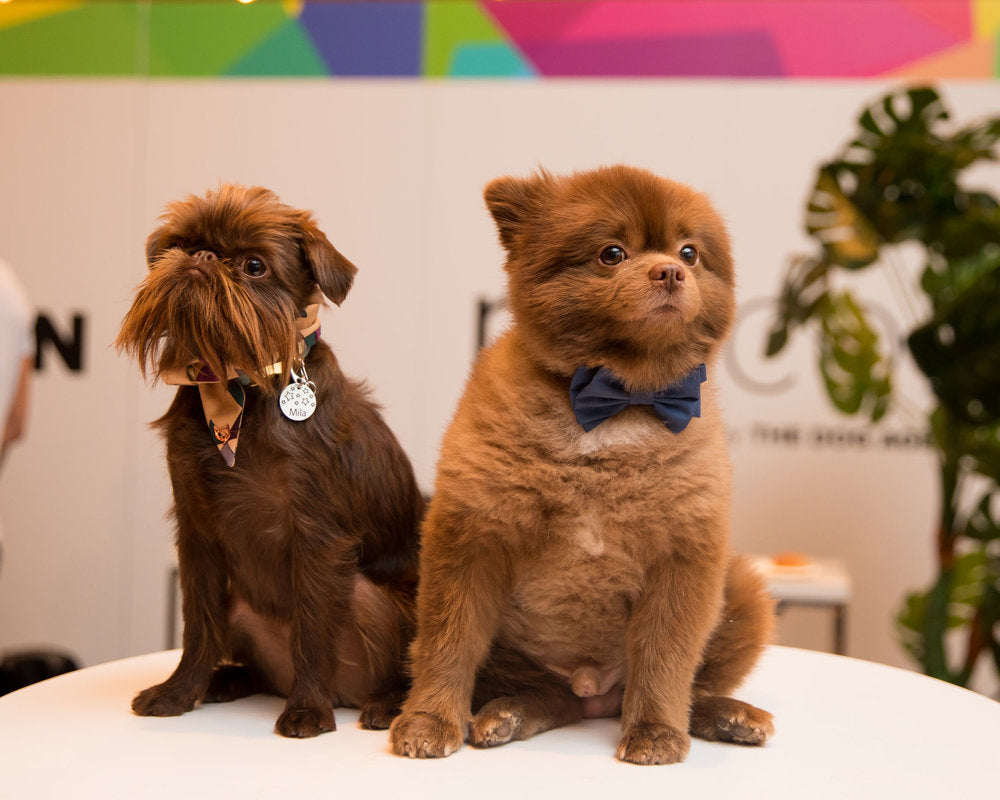 PetCon NYC: Everything we saw, from the world's most famous pets to diamonds made out of pet ashes