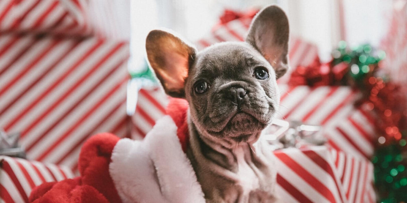 Best Gift Ideas for Dogs and Dog Lovers 2019