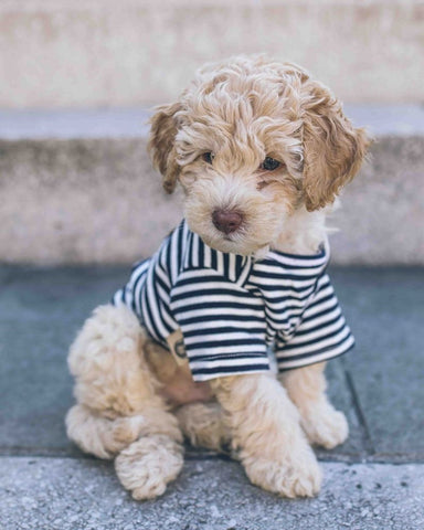 FLOUFFY FEEL cotton striped dog t-shirt in blue
