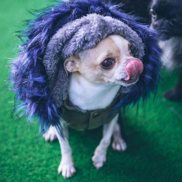 Dog parka with faux-fur collar in blue