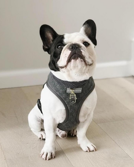 Emil dog harness