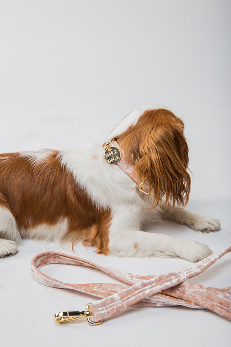 NICE DIGS Velvet dog leash in peach