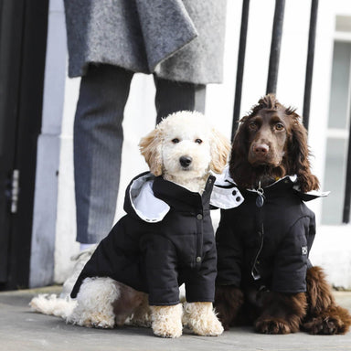 Cappa Hooded Dog Coat