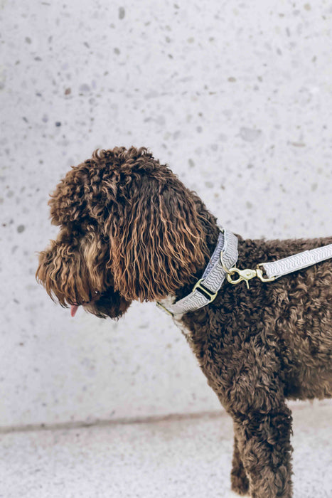 Martingale Dog Collar – Chef l'Bark Cream & Black