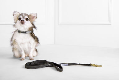 Original Dog Leash – Chef l'Bark Black & Cream