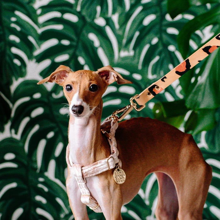 NICE DIGS Velvet dog harness in peach