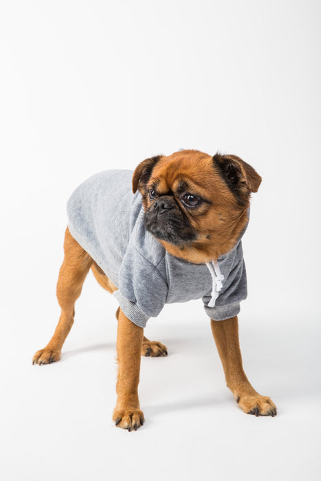 FLOUFFY FEEL oversized dog hoodie in grey