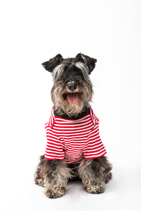FLOUFFY FEEL cotton striped dog t-shirt in red