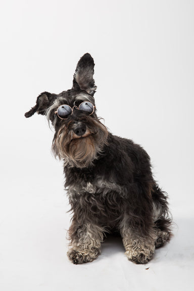FLOUFFY FEEL round dog sunglasses with black lens