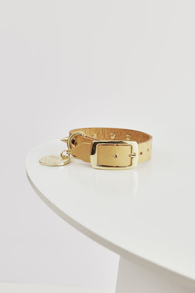 NICE DIGS Spike Dog Collar Gold