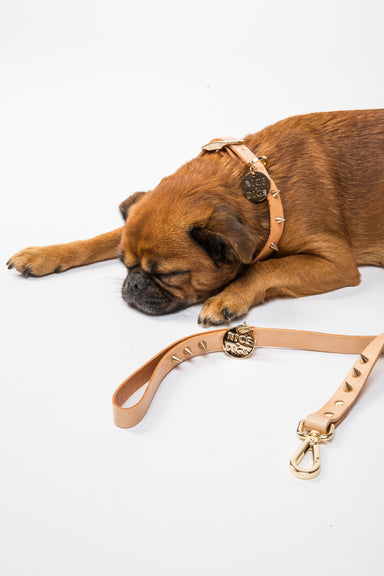 NICE DIGS Spike dog leash in gold