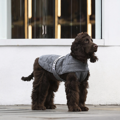 Cappa Adjustable Dog Coat