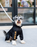 Schnauzer dog wearing a black raincoat onesie
