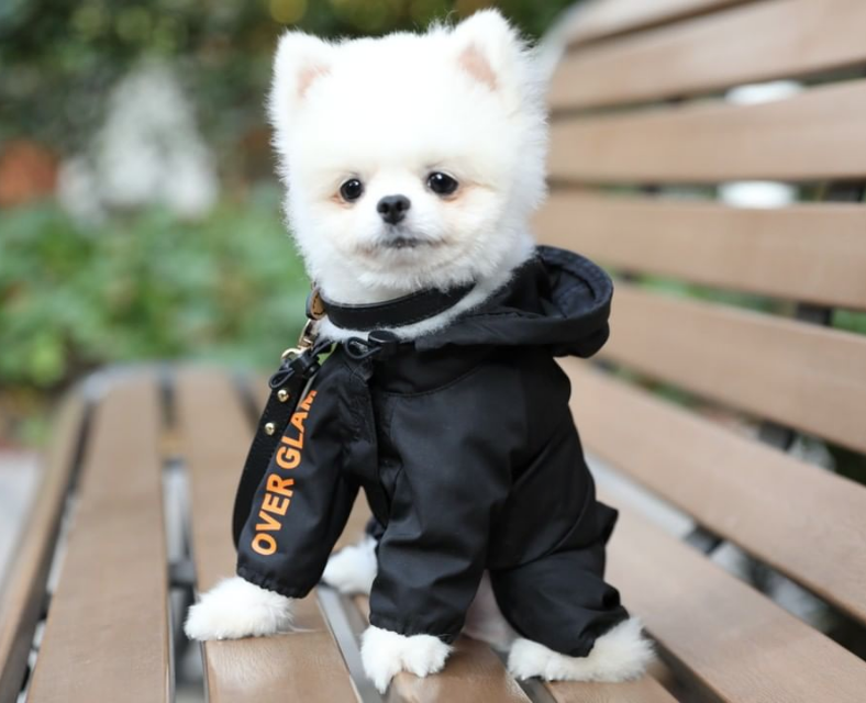 pomeranian-dog-raincoat-black