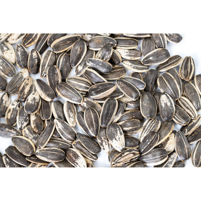 In-Shell Roasted Sunflower Seeds (Unsalted)
